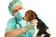 Veterinarios especialistas en perros