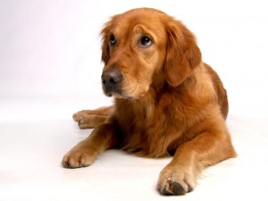 edad esterilizacion perro