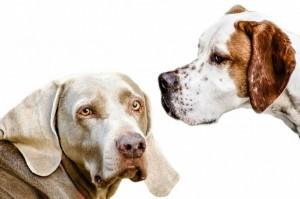 ventajas de esterilizar perro